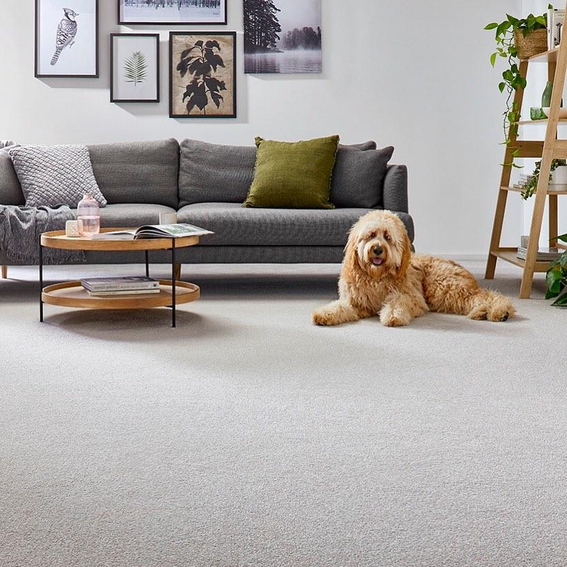 Feltex Carpets Sutherland Shire
